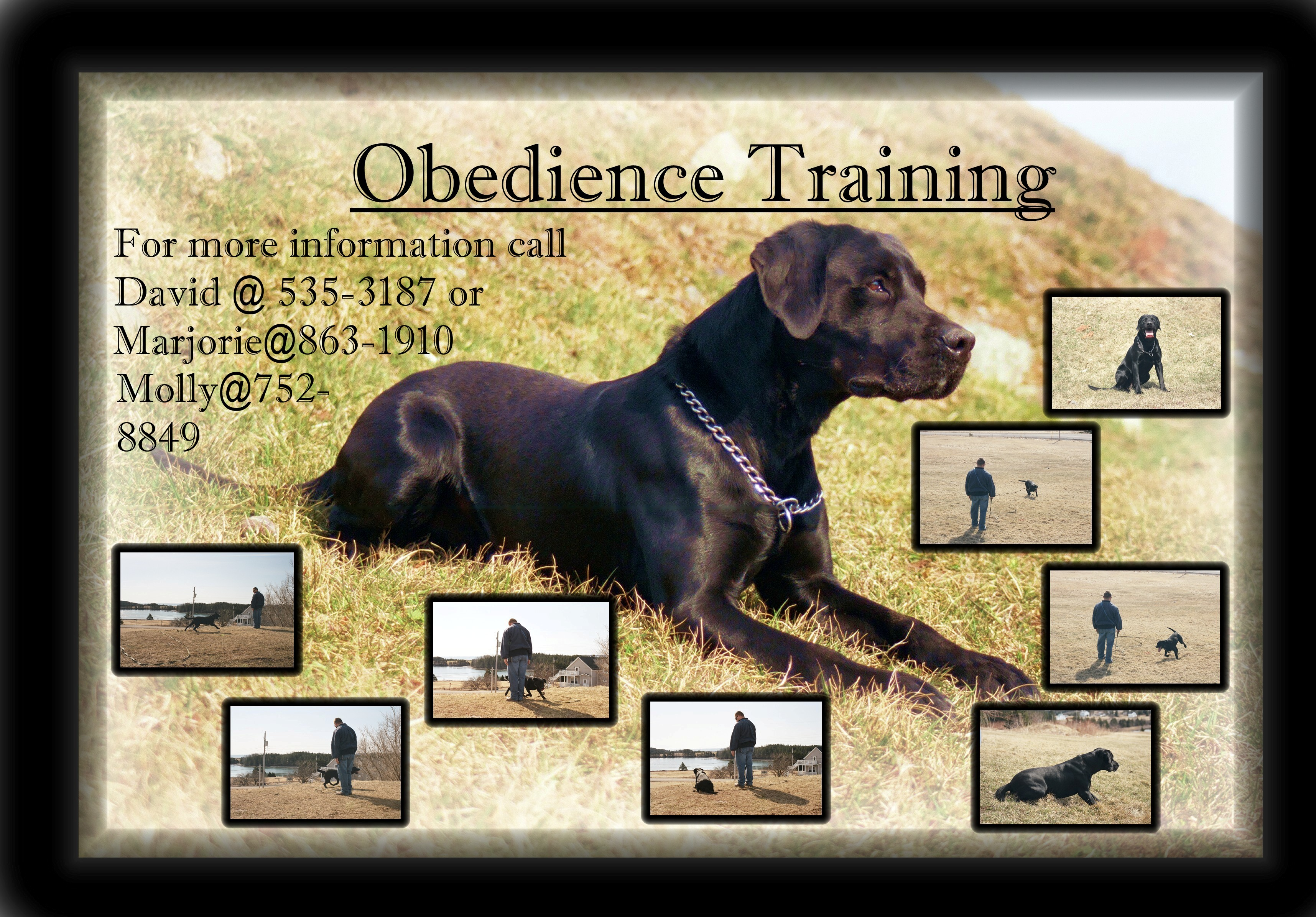 Down Or Off For Dog Training